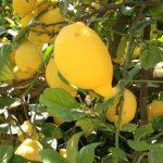 El Sureste español: líder de la producción nacional de frutas y hortalizas