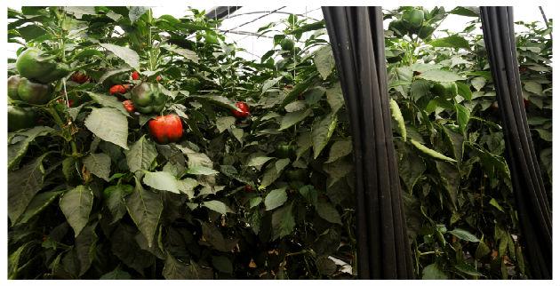 El sector agrícola del Levante clave para la economía española