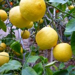 Los cultivos hortícolas del próximo invierno