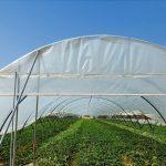 Cultivos de invernadero en la zona del trasvase Tajo-Segura