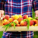 El levante español, principal cultivo del cuarto frutal más producido en el mundo: El melocotonero