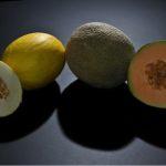 El melón: cultivo destacado del Levante español