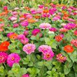 El mercado nacional de flores supone un 30% de la facturación anual de las empresas