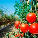 El sector hortofrutícola sigue en continuo aumento