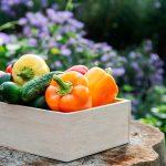 La zona del Trasvase Tajo-Segura lidera la exportación de hortalizas