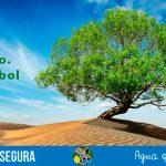 28 de junio – Día del árbol