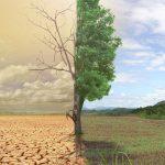Día Mundial de la Desertificación
