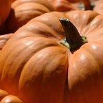 La calabaza: un cultivo cada vez más presente