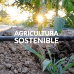 El Levante: un ejemplo de agricultura sostenible y eficiente